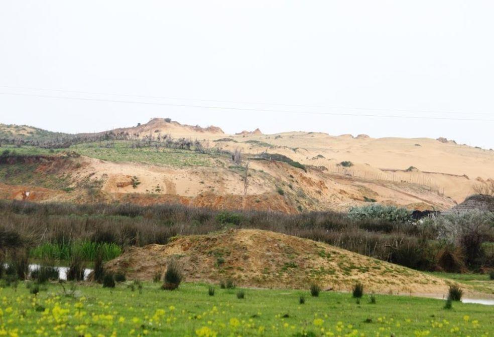 Des dunes pour préserver les zones humides de Guerbes- Sanhadja